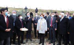 Akşener'in katılımıyla 382 sağlık çalışanı anısına zeytin ağacı dikildi