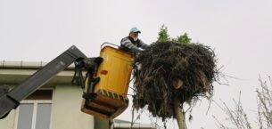 Leylek yuvası belediye ekiplerince temizlendi